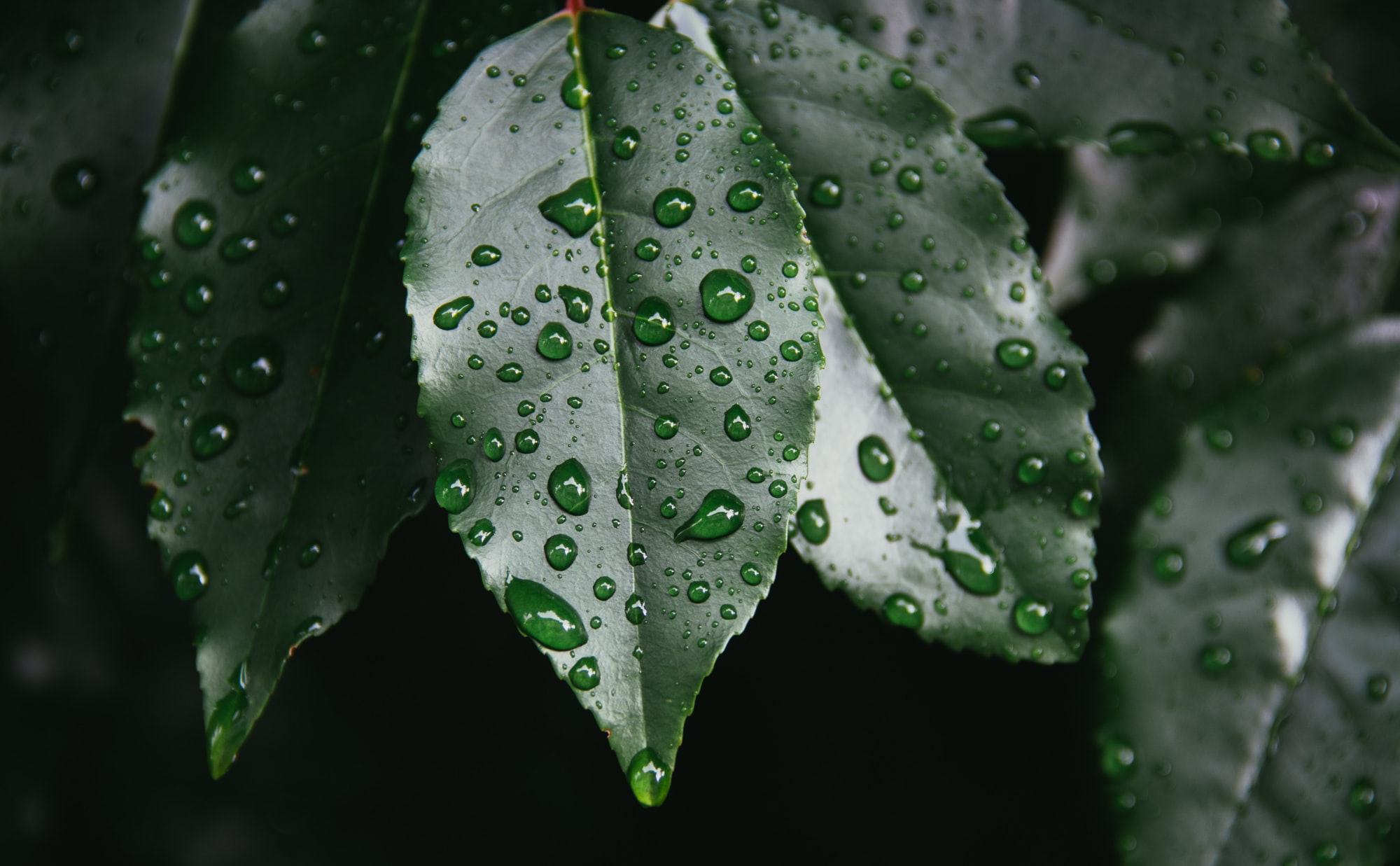 Monsoon's Knowledge Drop #2